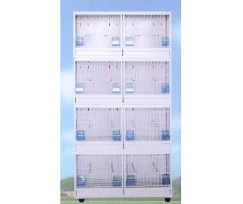 Bird Cage Cría en venta